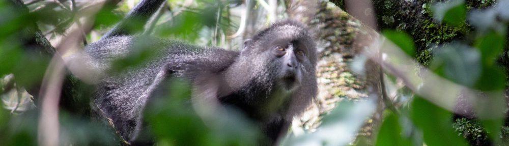 Daria in Kenia